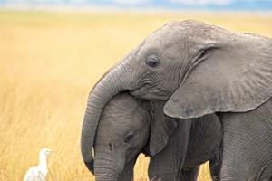elephants-mom-baby